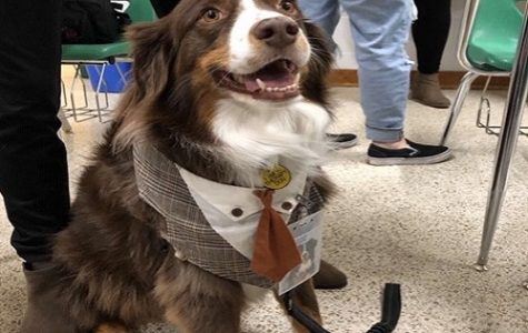 Therapy dog 'Leroy Brown' visits CHKD club