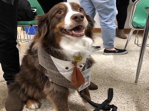 THERAPY DOG LEROY Brown visits a club meeting for the Children of the King's Daughters (CHKD) hospital to show the love and affection he provides to children at the hospital. Leroy Brown is just one of the therapy dogs that  is certified to be around these children.